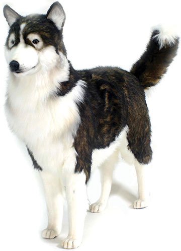 Black Husky Dog Lifesize 5046