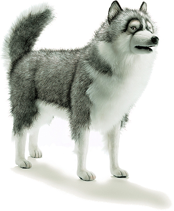 Gray Husky Dog Lifesize 5045