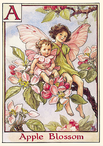 The Apple Blossom Fairies by R. John Wright