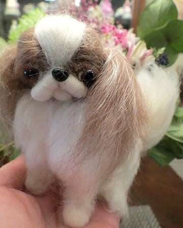 Japanese Chin brown and white