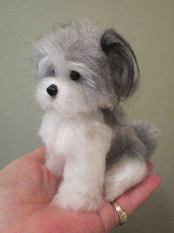 Havanese Gray And White