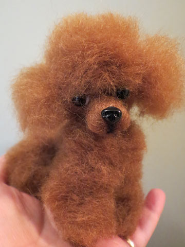 Apricot Poodle Ginger-Colored