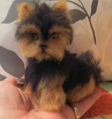 Yorkshire Terrier Short Coat