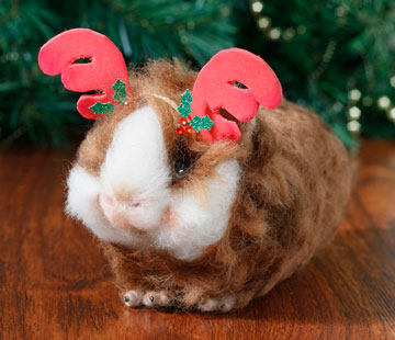 Rudolph The Guinea Pig