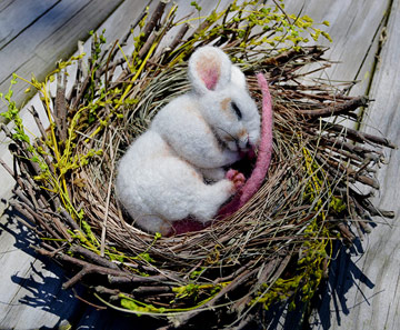 Spring Twig, White Nesting Mouse