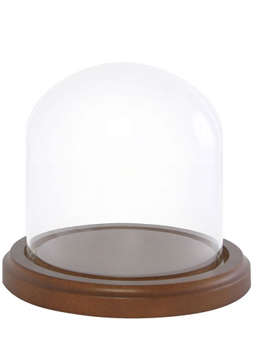 Glass Dome With Walnut Base