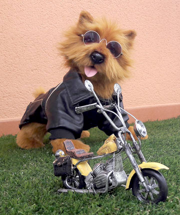 The Norwich Terrier Racer by Alisa's Wonderland