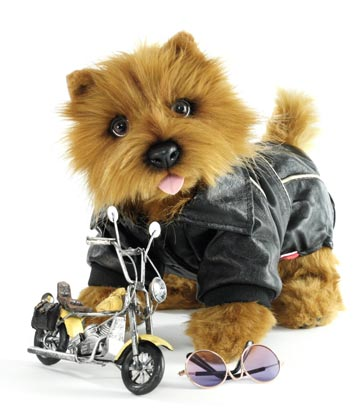The Norwich Terrier Racer
