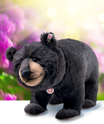 Mr. Big Black Bear 006289