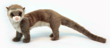 Ferret On All Fours, Brown 6310