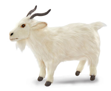 Turkish Goat, White 6486