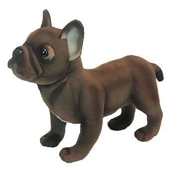 French Bulldog, Standing 6594