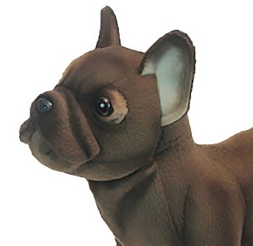 French Bulldog, Standing 6594 by Hansa