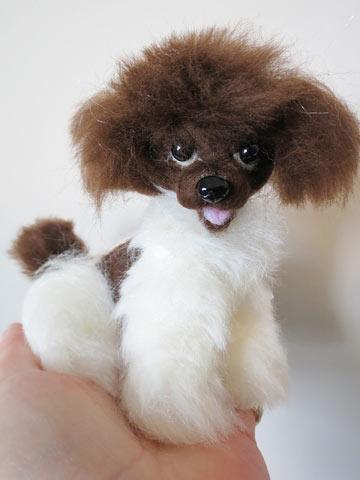 Parti Miniature Poodles Uk